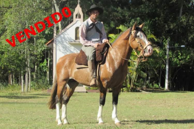 Leilão Digital Junção Crioula - NB COIMEIRO, SB B523322