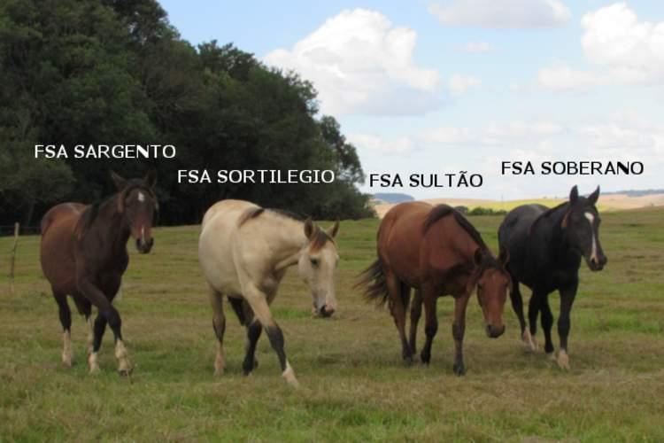 FAZENDA SANTO ANTÔNIO - FSA Sortilegio, FSA Sultão, FSA Soberano, FSA Sargento, SB B543424