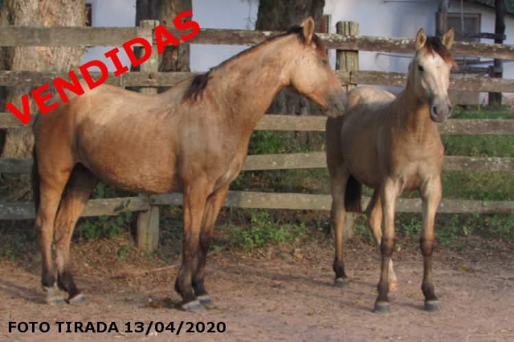 Cabanhas Reunidas - GATURAMA DA SÃO MARCOS, SB B208907