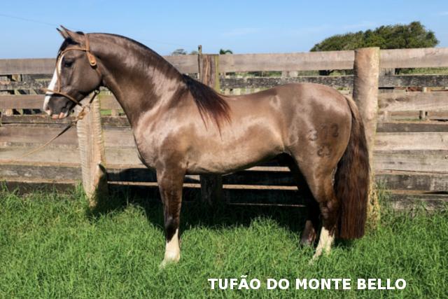 CAB. MONTE BELLO - FÁBULA DAS DUAS PALMAS, SB B175977