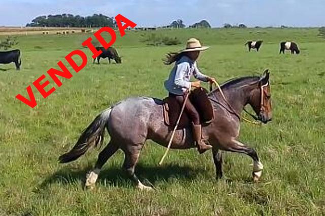 EL BARQUERO E CONVIDADOS - RECEITA DO CERRO FRIO, SB B425480
